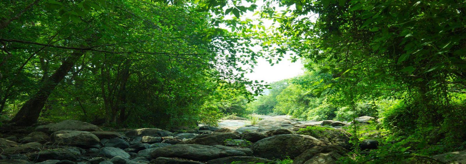 Green Forest in Ezhattumugham
