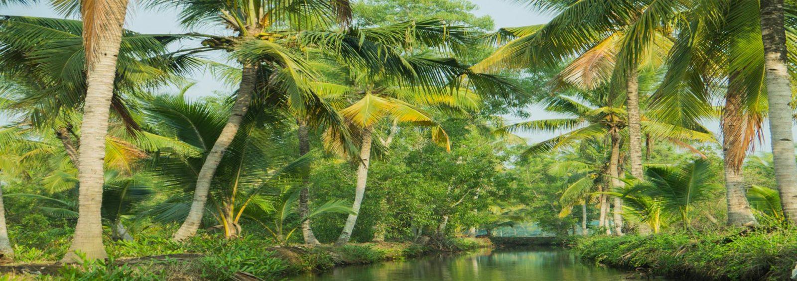 Island in Munnar